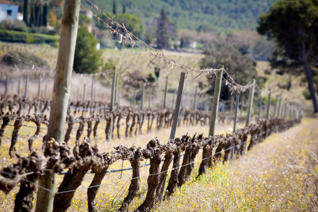 Wine Tourism: the vineyard
